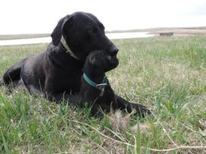 Black Male Puppy 5
