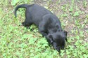 #5 Black Male with White Lightening Streak - Star On Top Reserved-CA.