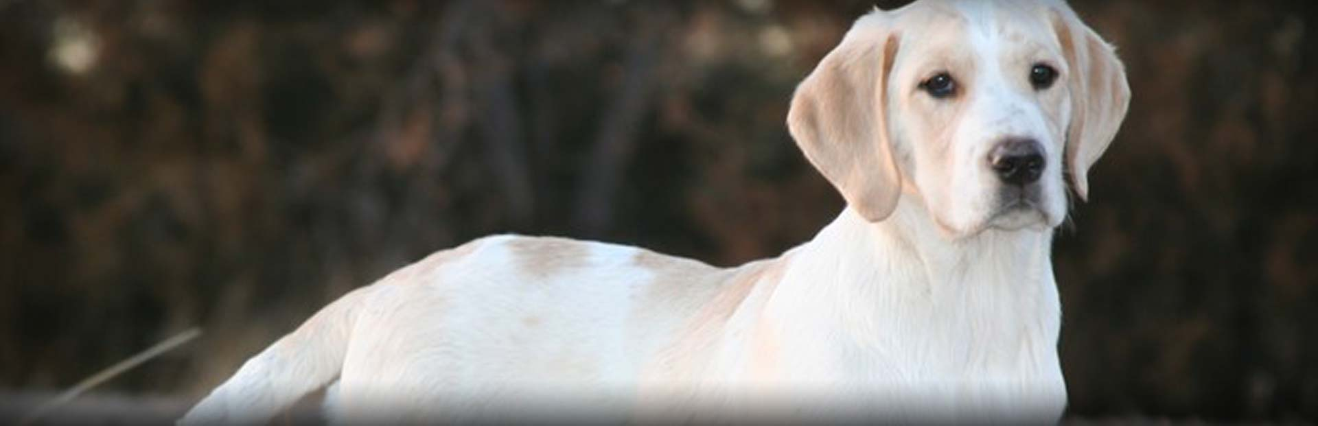 Contact Us at Hybrid Retrievers