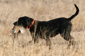 Genetic Selection & Quality Pups